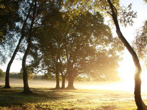 Woodland Management Plan