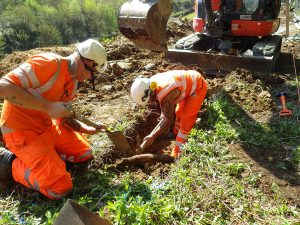 Arboricultural consultant for site supervision
